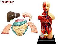 آناتومی بدن